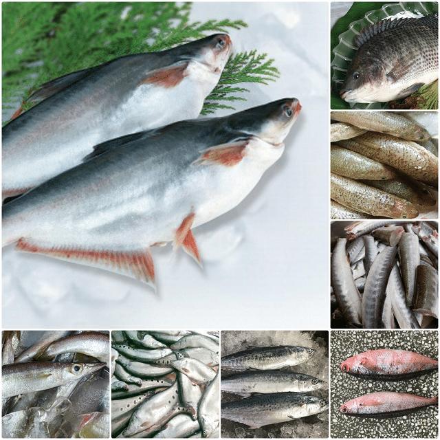 Thực phẩm tốt cho sinh lý nam - Các loại cá khác nhau